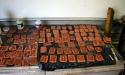 img_5957aurora-plaque